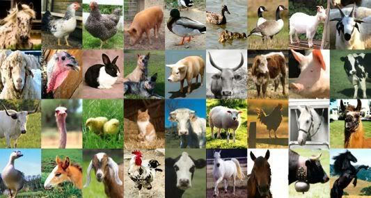 List of National Animals, bird and flower of all Countries